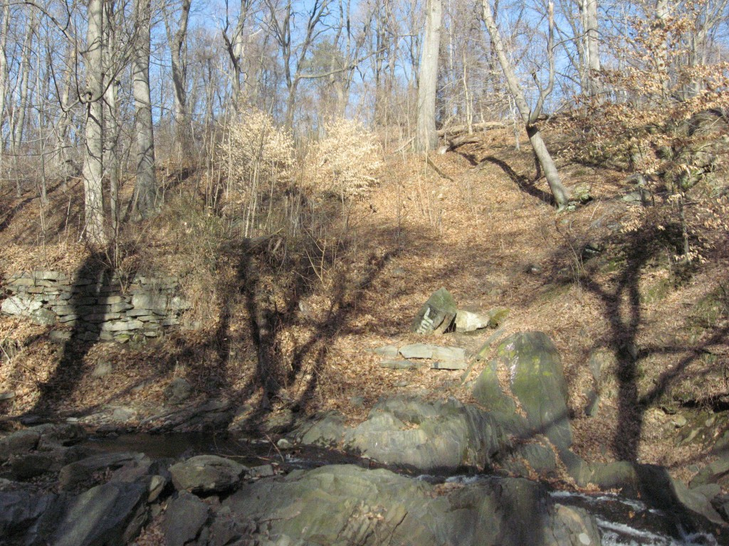 Site s30 with a large infestation of Aralia elata on the hillside above it  West Branch of Indian Creek, Morris Park Philadelphia