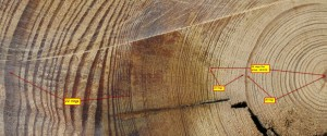 4-X-8-Pine-Timber-ring-count-detail