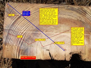 4-X-8-yellow-pine timber-age-labeled ring counting project and photography courtesy of Mark Daniel
