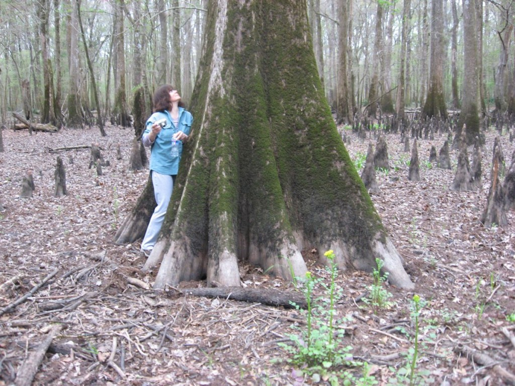 Isabelle Dijols inspects the Cypress Trees. Marianna, Florida