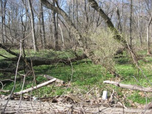 Along Cobbs Creek, Bocce Woods, Cobbs Creek Park, West Philadelphia