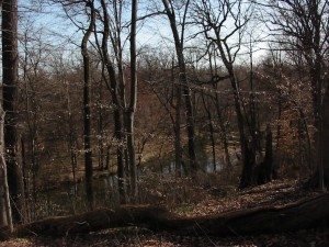 The hillside near the Pennypack Park Environmental Center