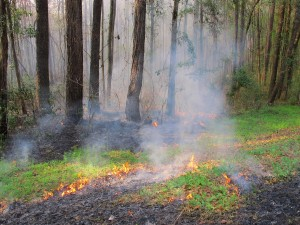 prescribed-burn-2, Thomasville, Georgia