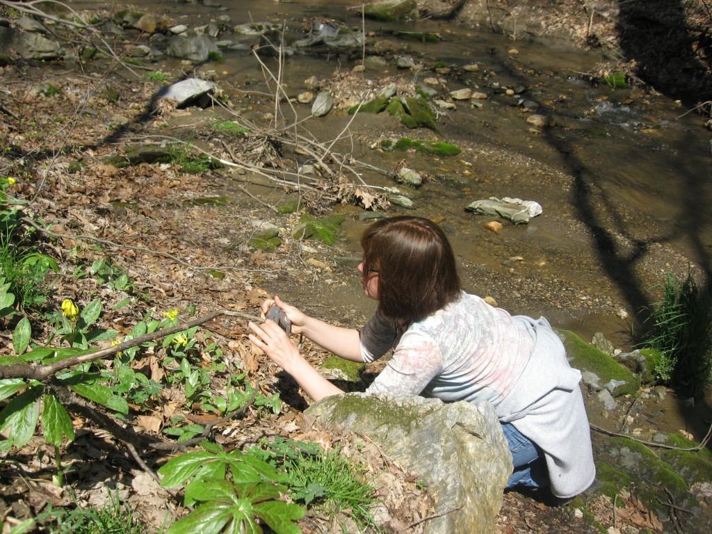 Shenks Ferry wildflower preserve. Lower Susquehanna River Valley, Pennsylvania
