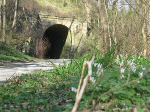The entry tunnel, Shenks Ferry Wildflower Preserve: A rich ravine habitat on the lower Susquehanna River Valley, Pennsylvania