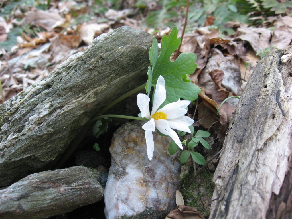 Tucquan Glen Nature Preserve, Martic Township, Pennsylvania