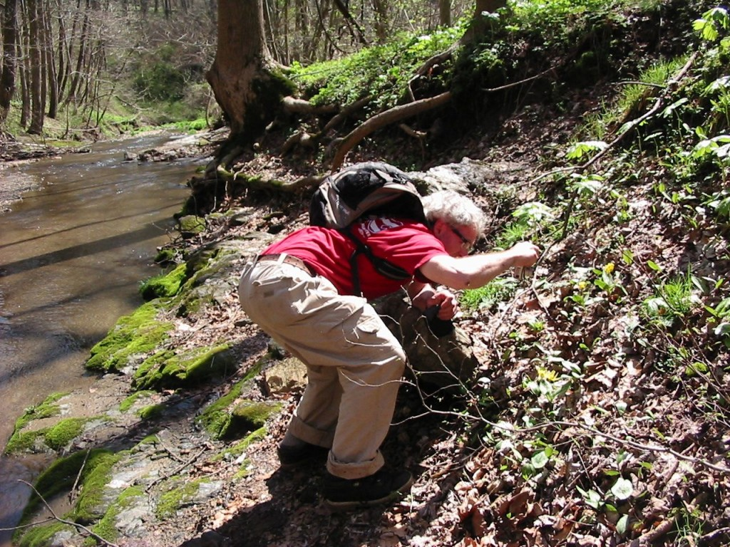 Sean Solomon photographing a Trout Lily in Shenks Ferry Wildflower preserve