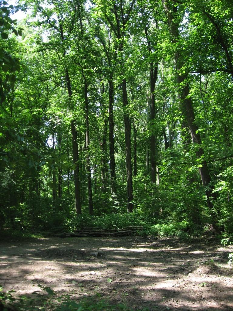 Assault on the Morris Park Woodland Area - Philadelphia, PA