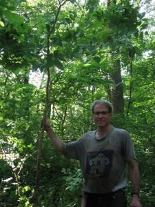 Sean Solomon rescuing Uprooted Hackberrry - Morris Park - Philadelphia, PA