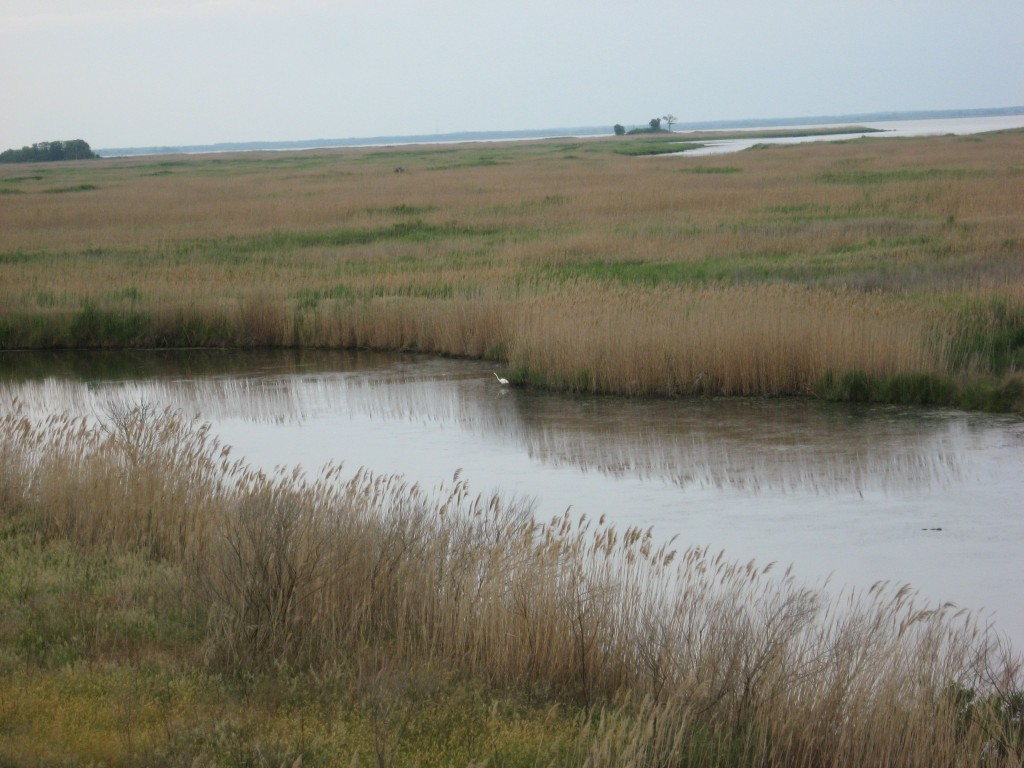 Bombay Hook National Wildlife Refuge, Delaware
