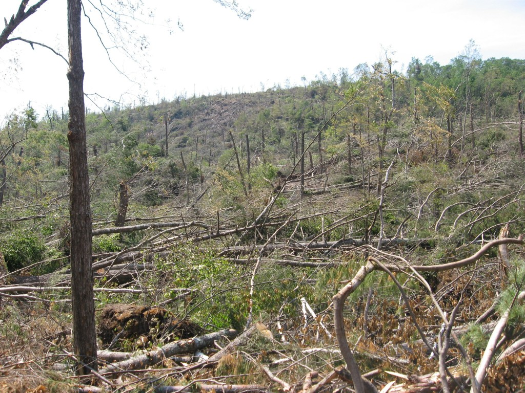 Tornado deforestation, Brimfield State Forest, Brimfield, Massachusetts