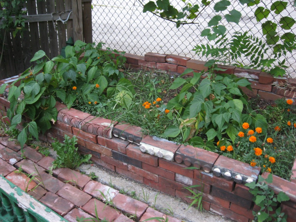 Bed of green beans in the Sanguine Root vegetable garden, Viola street, East Parkside, Philadelphia
