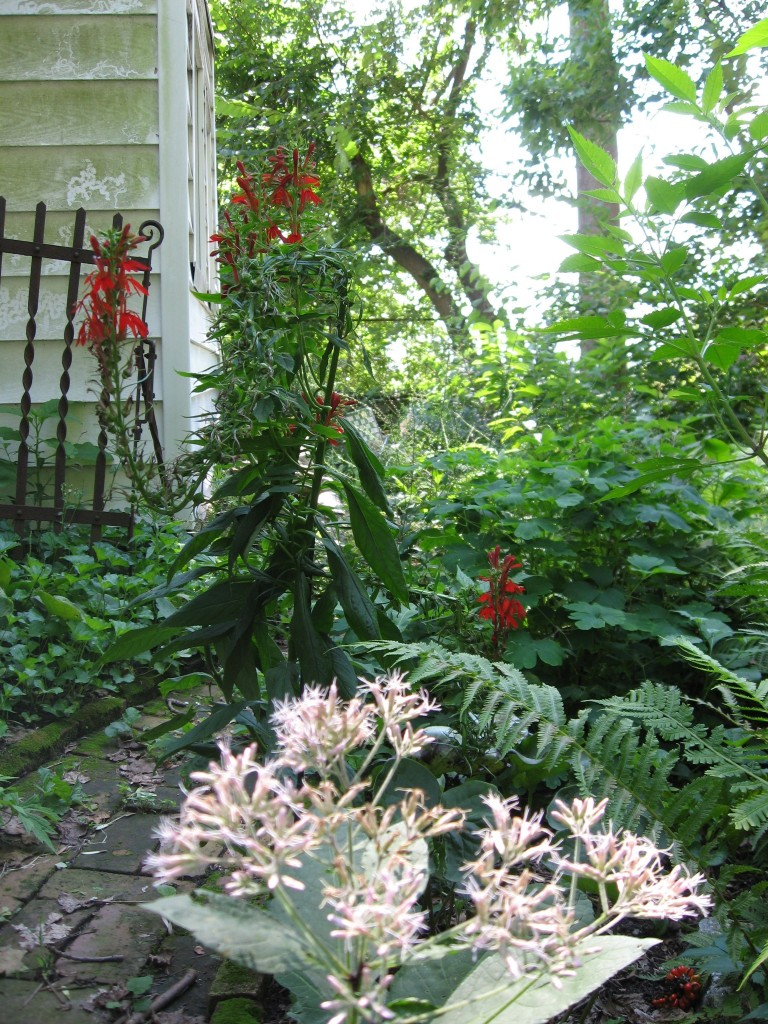 The Hummingbird Garden of The Sanguine Root,  Overbrook, West Philadelphia
