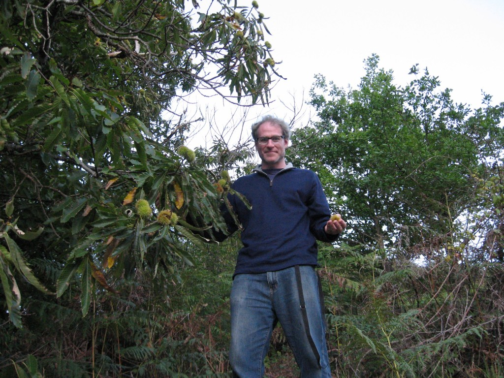 Sean Solomon with Castanea sativa in Conques, France
