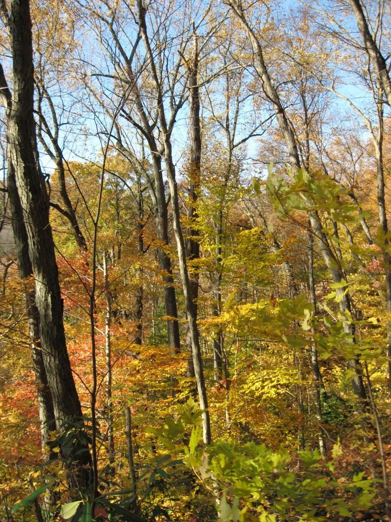 Susquehannock State Park, Lancaster County, Pennsylvania
