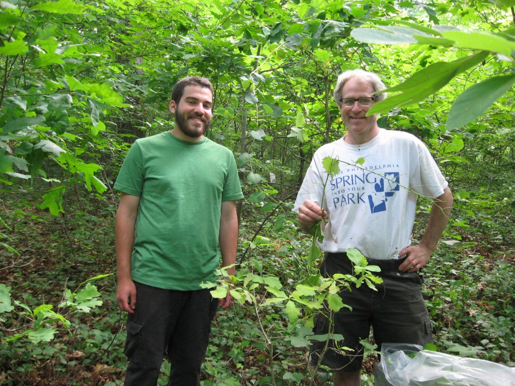 Garlic mustard removal in Morris Park, Philadelphia
