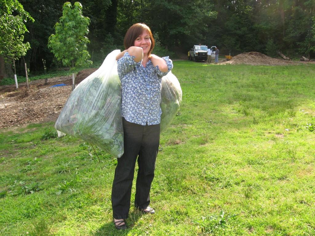 Garlic mustard removal in Morris Park, Philadelphia