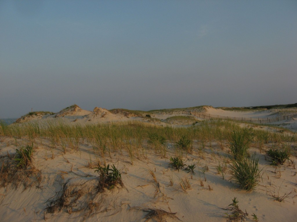 The Jersey shore, Island Beach, New Jersey