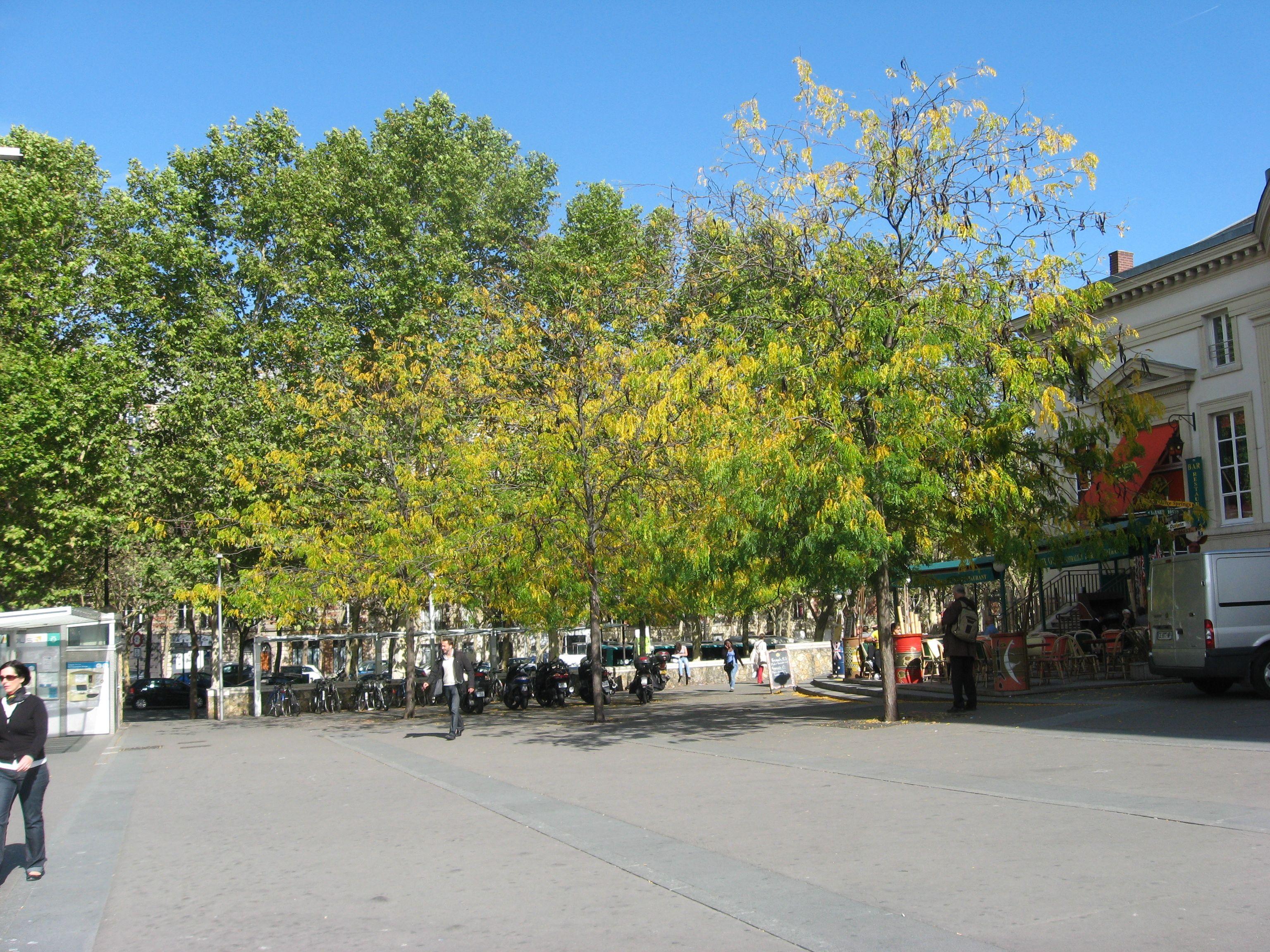 PARIS STREET TREES – The Sanguine Root