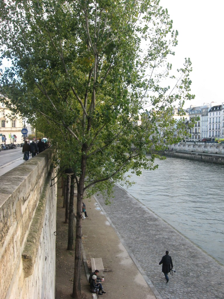 Linden tree, Paris, France