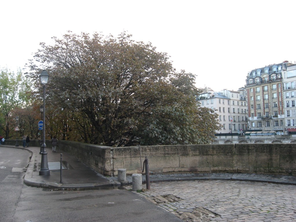 Horse Chestnut, Quartier Des Iles, Paris, France