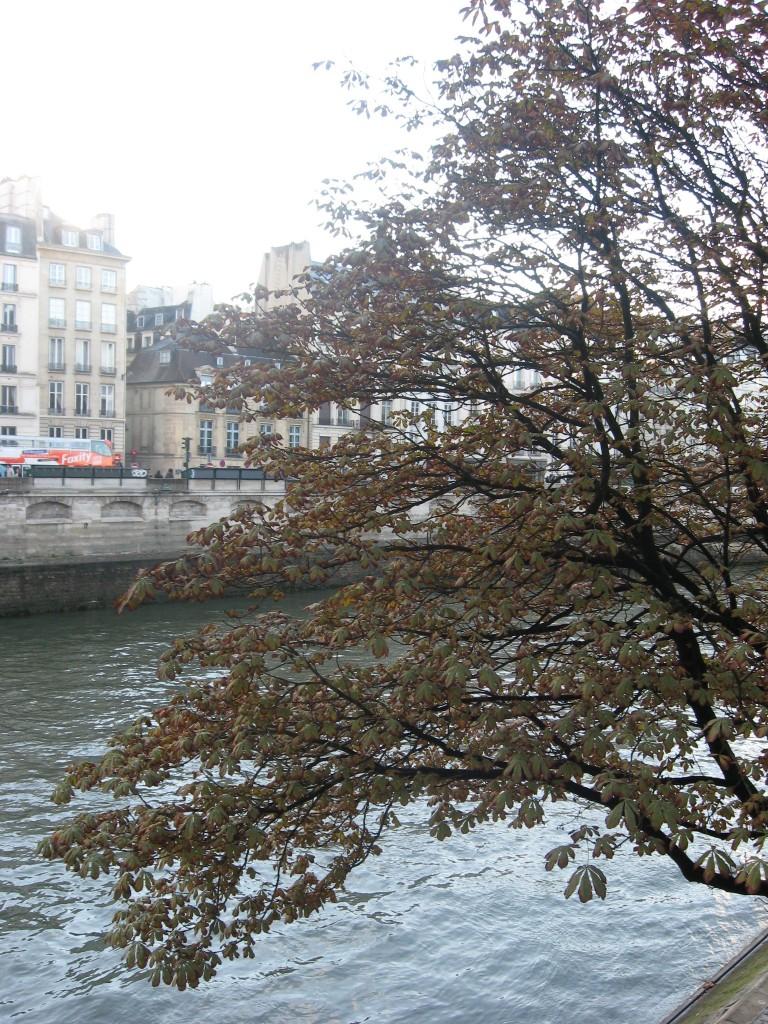 Horse Chestnut, Paris, France