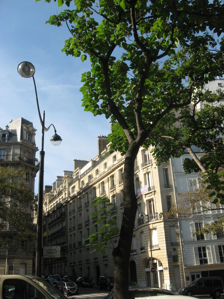 Empress Tree, Av Carnot, Paris, France