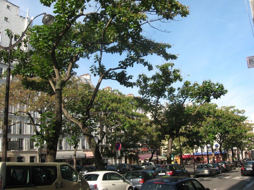 Empress Tree, Av Carnot, Paris, France