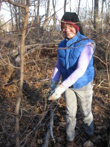 Volunteer Isabelle Dijols removes Japanese Honeysuckle from Spicebush in Morris Park, Philadelphia