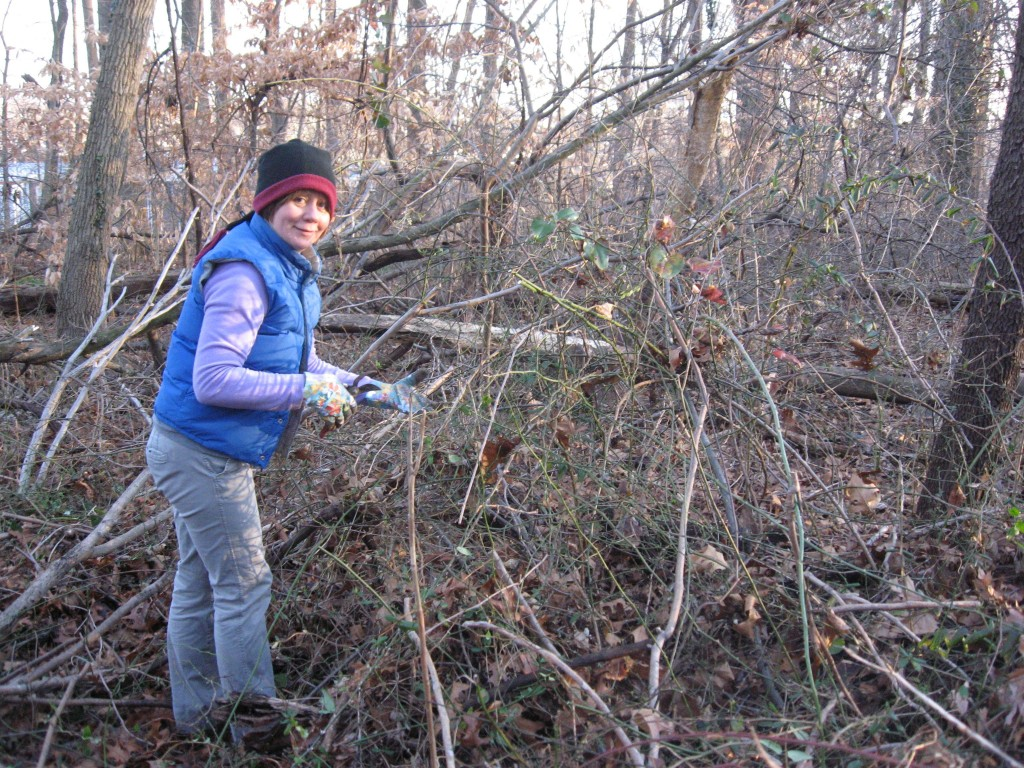 Isabelle Dijols removes invasive Multiflora rose,Morris Park, Philadelphia