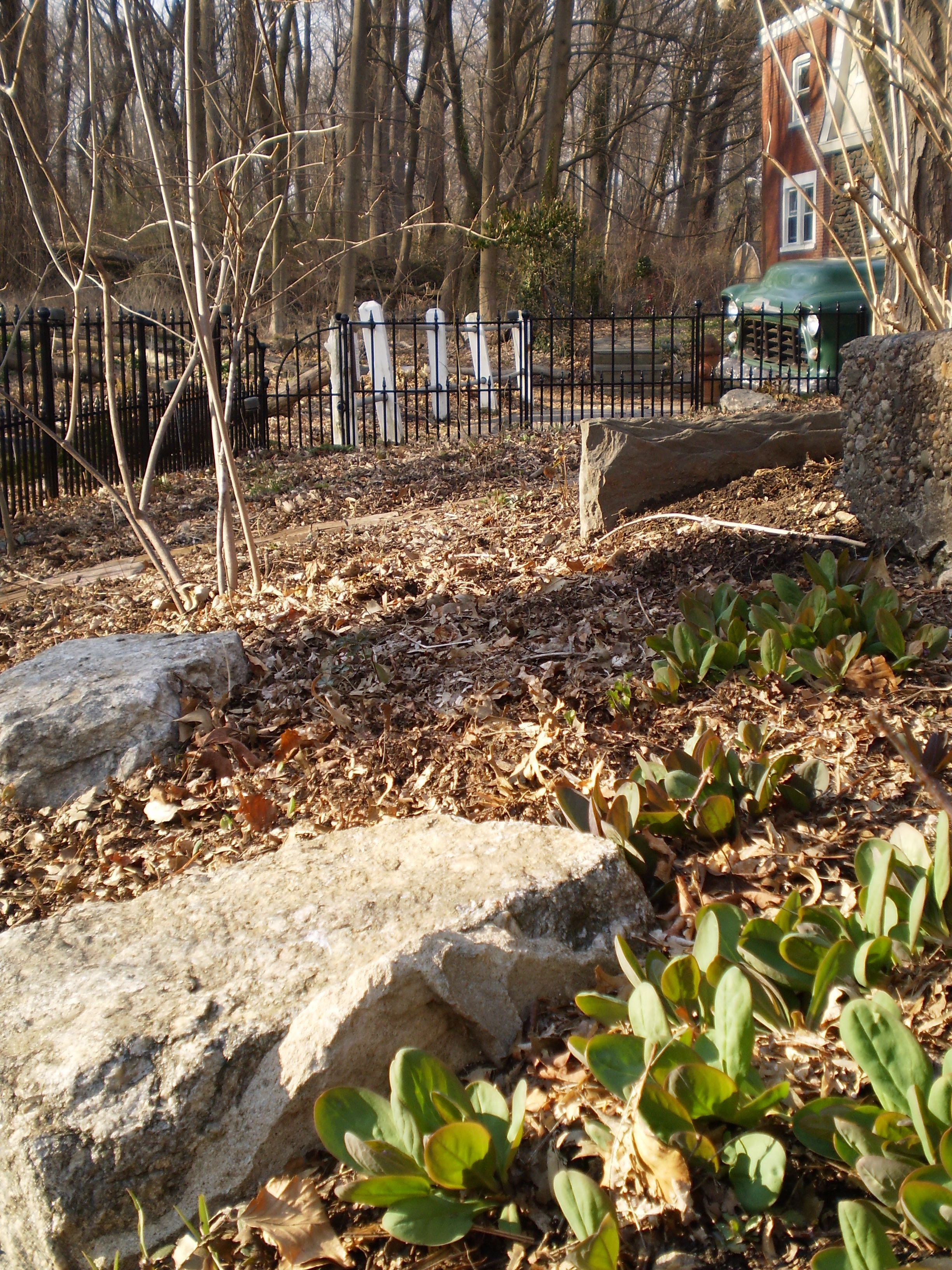 OUR PENNSYLVANIA NATIVE PLANT GARDEN IN EARLY SPRING – The Sanguine Root