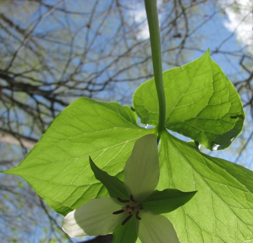 Ferncliff wildflower Preserve