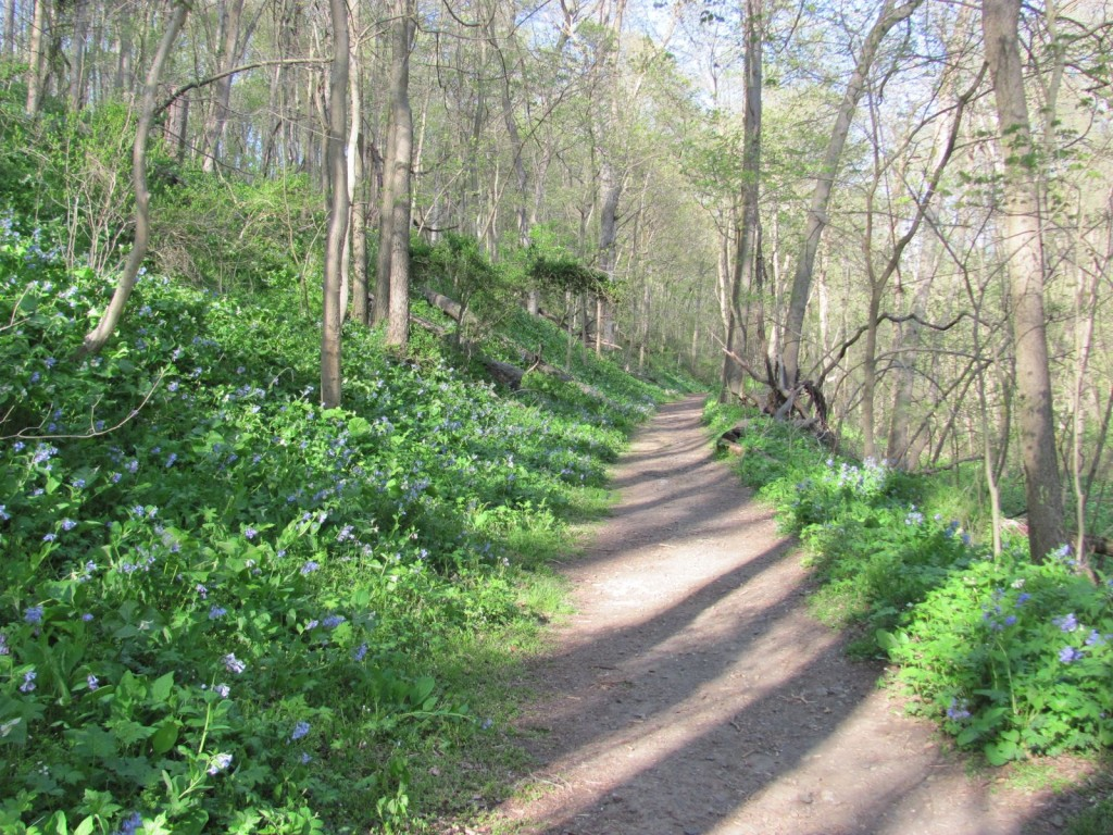 SHENKS FERRY WILDFLOWER PRESERVE, MONDAY, APRIL22ND, 2013