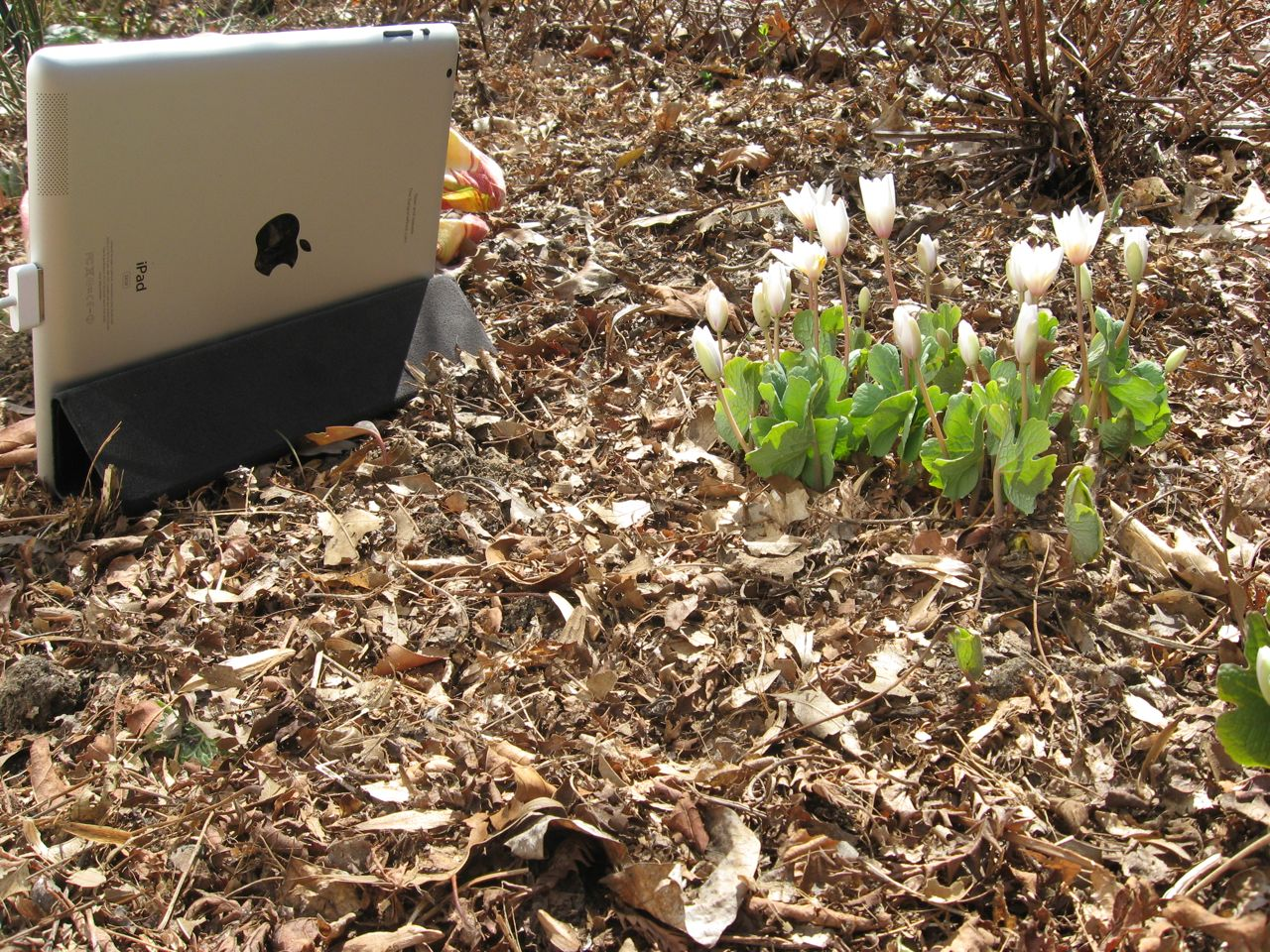 A SPRING GARDEN 2013 RETROSPECTIVE: BLOOMING FLOWERS AND TIME-LAPSE ...