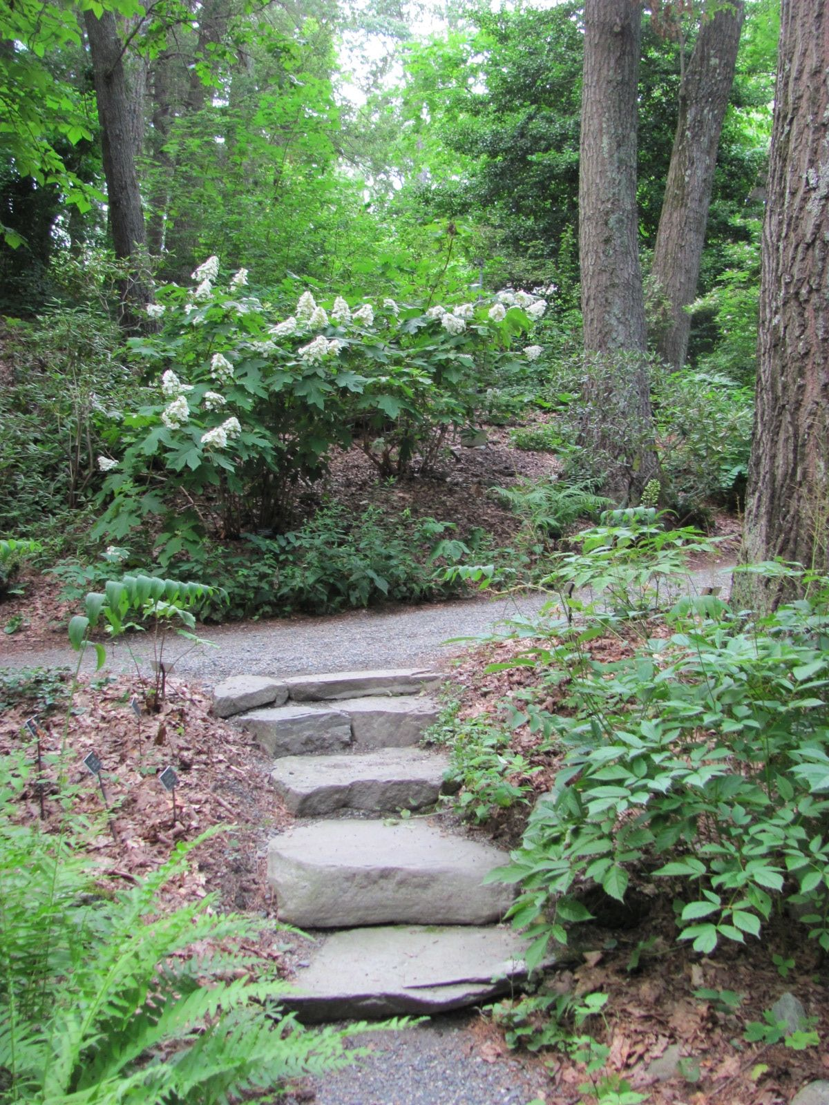 Garden In The Woods Framingham Home Design Ideas And Pictures