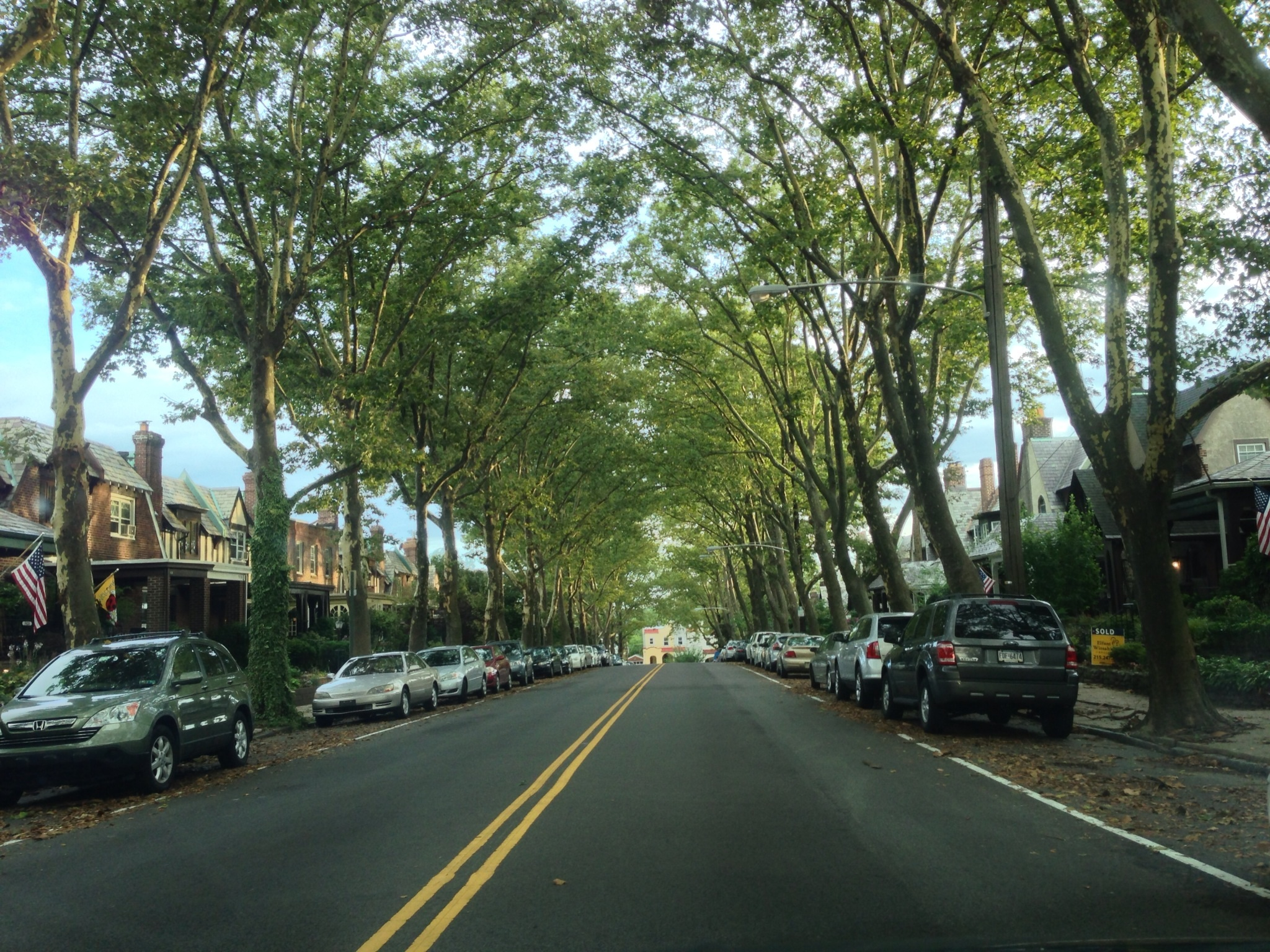 An amazing cathedral-like canopy of London Plane Street trees on Queen Lane in The & London plane tree in full street canopy Queen Lane East Falls ...