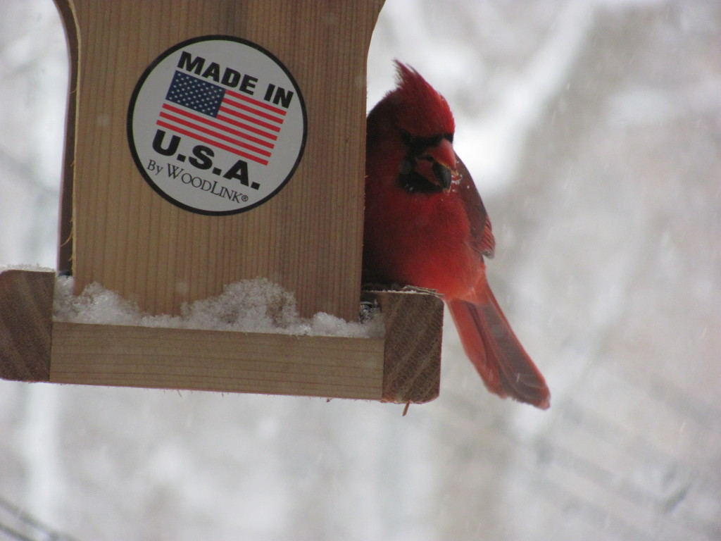 Cardinal in birdfeeder. www.thesanguineroot.com