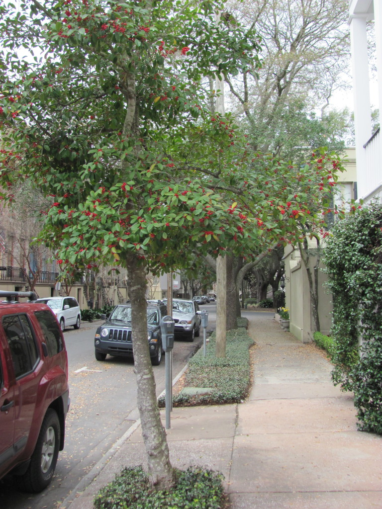 Savannah Street Trees, www.thesanguineroot.com